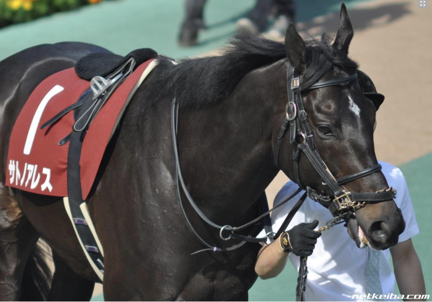 日本の競馬サトノアレスが欧州で種牡馬